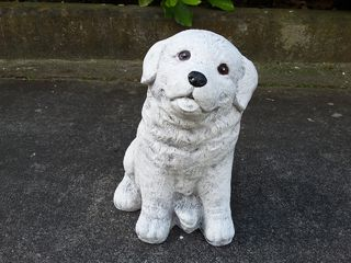 Labrador $30