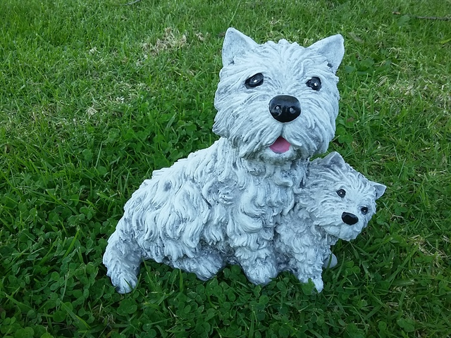 Scottish terrier $25