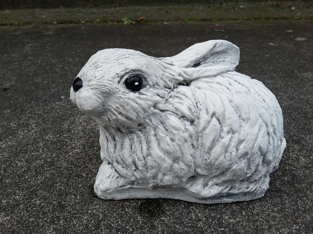 Rabbit sitting $20
